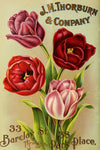 Free Graphic Friday - Spring Tulips