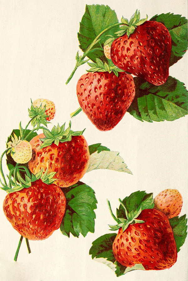 Free Graphic Friday - Vintage Strawberry Graphics
