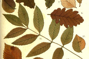 Free Autumnal Leaves Antique Printable Graphic