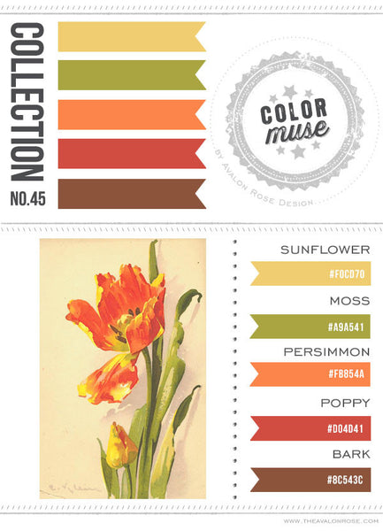 Color Muse: Collection No. 45