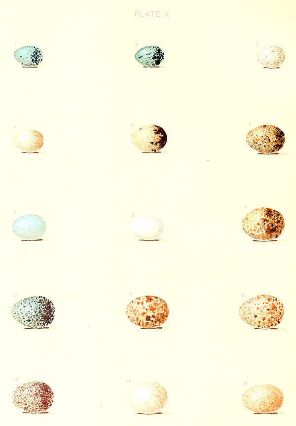 Free Vintage Egg Graphic