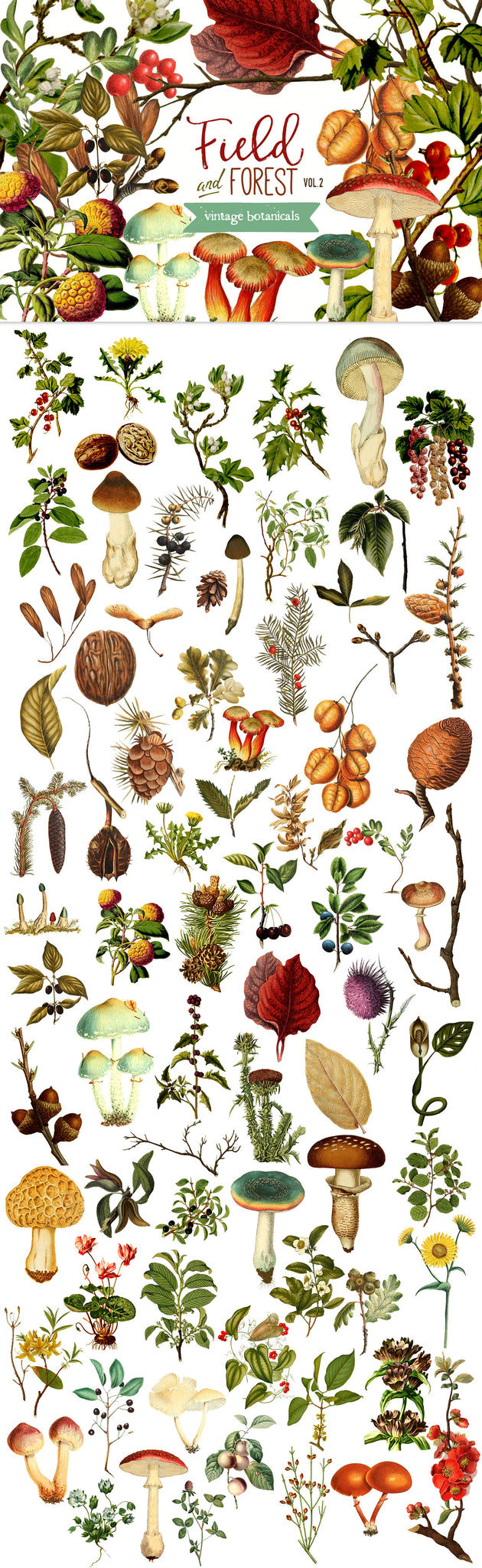 Field and Forest Vintage Botanical Graphics