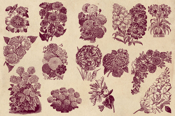 Vintage Flower Vector Graphics Vol. 2