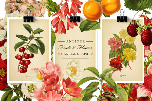 Antique Fruit and Flower Botanical Graphics