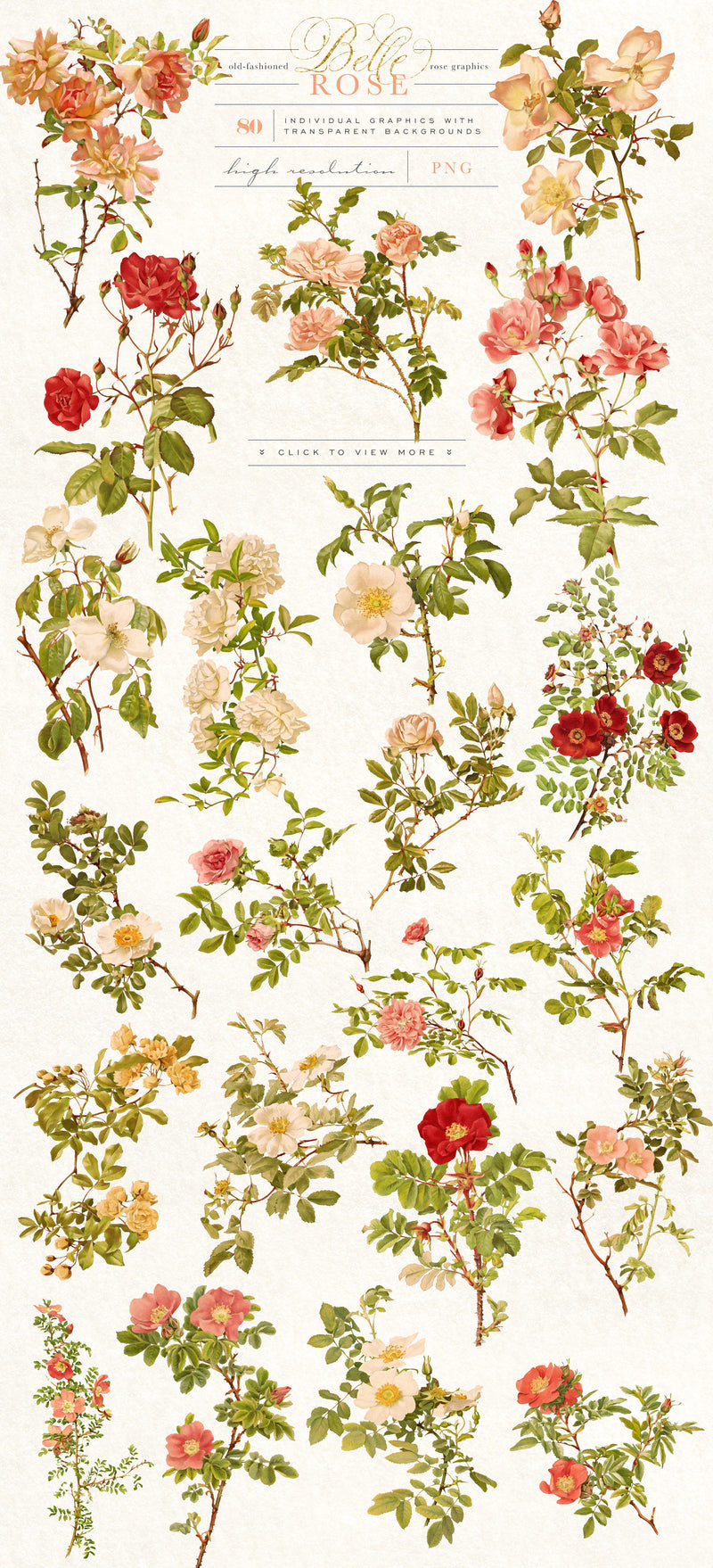 Belle Rose Antique Graphics Bundle