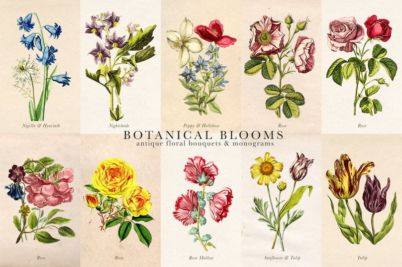 Botanical Blooms & Monograms