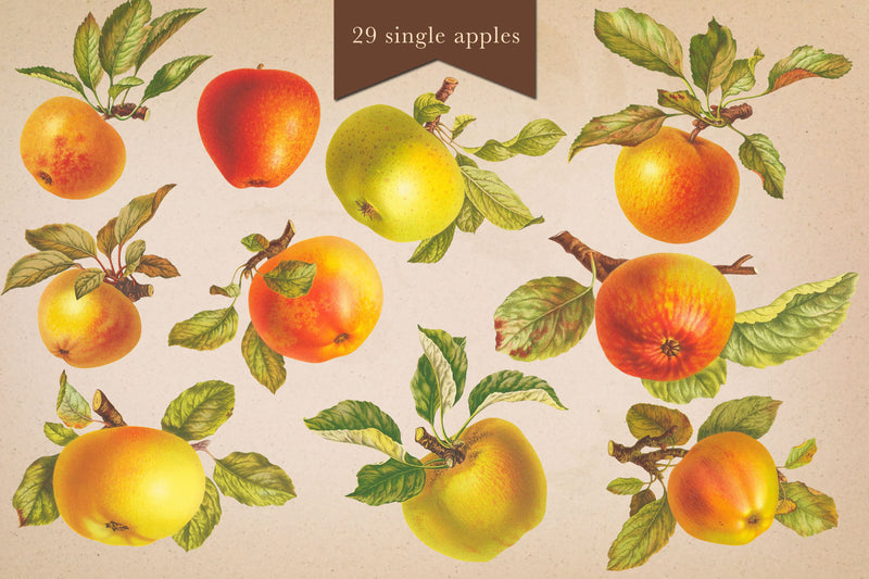 Cider House Apple & Pear Graphics