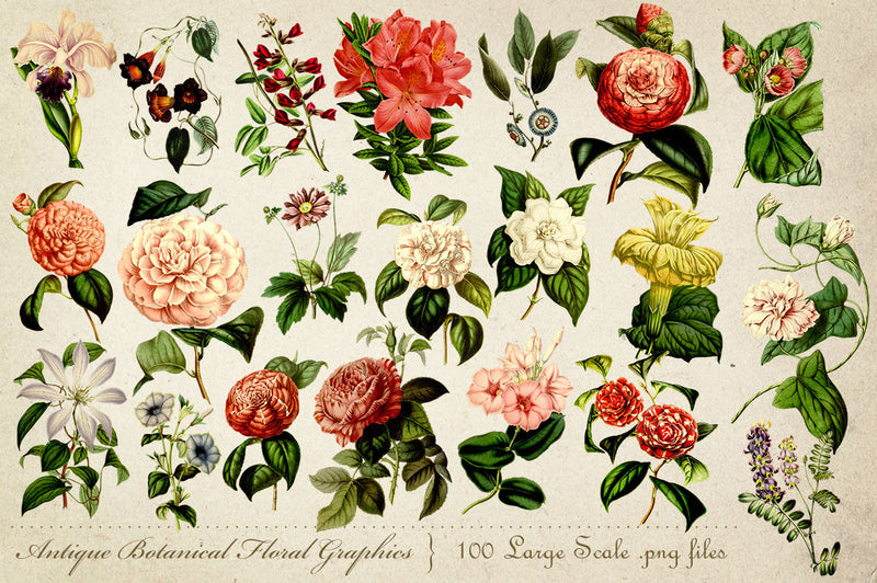 Antique Botanical Floral Graphics Mega Pack