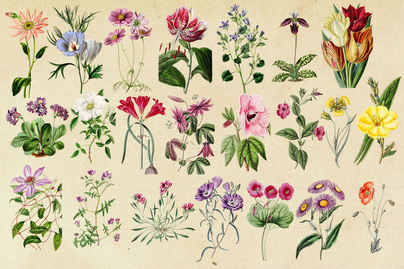 Antique Botanical Floral Graphics Mega Pack 2