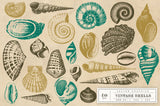 Vintage Shell Vector Graphics