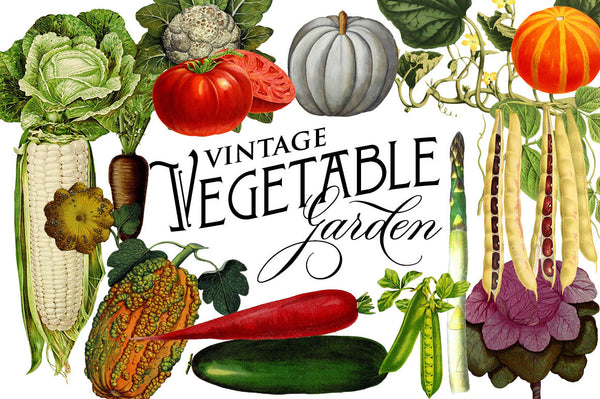 Vintage Botanical Vegetable Graphics