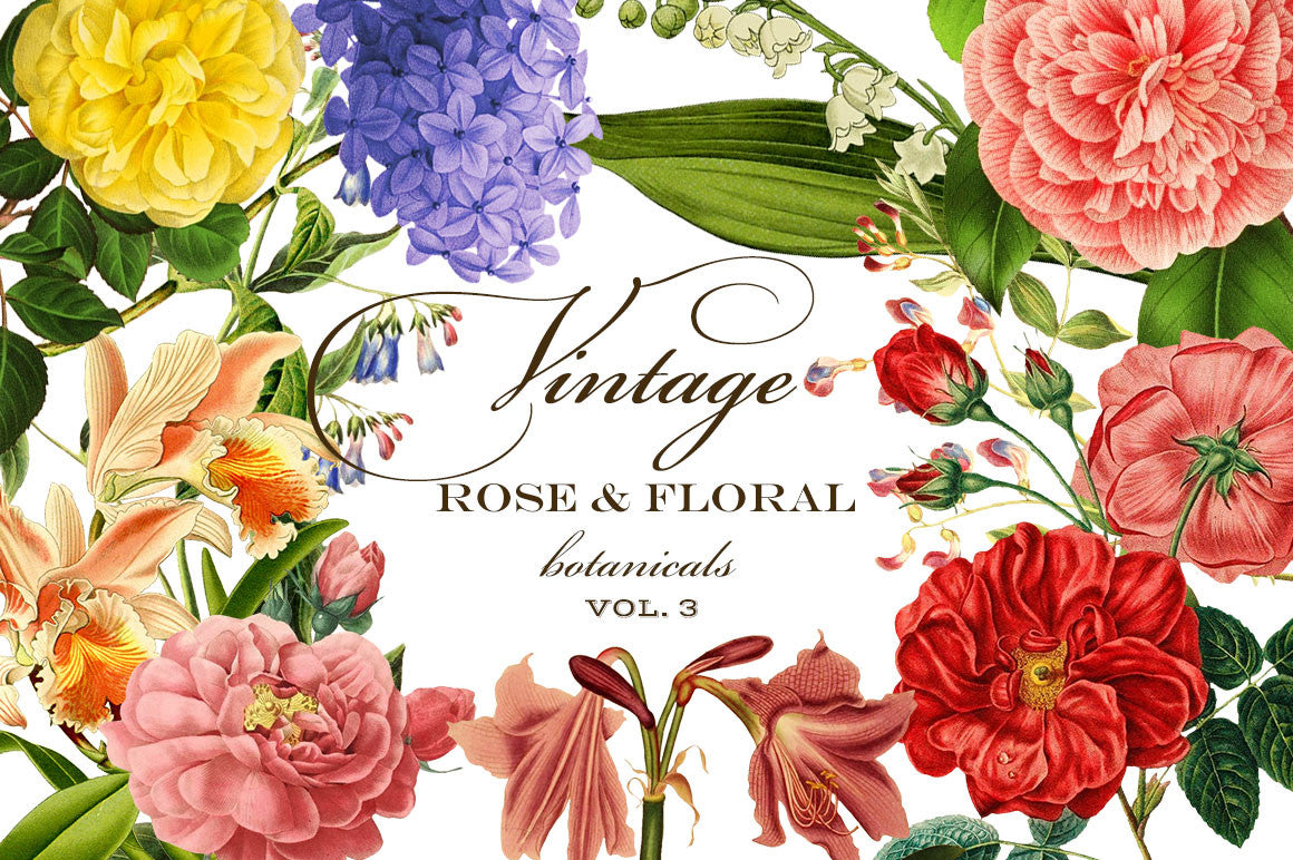 Vintage Rose & Floral Botanicals Graphics Vol. 3
