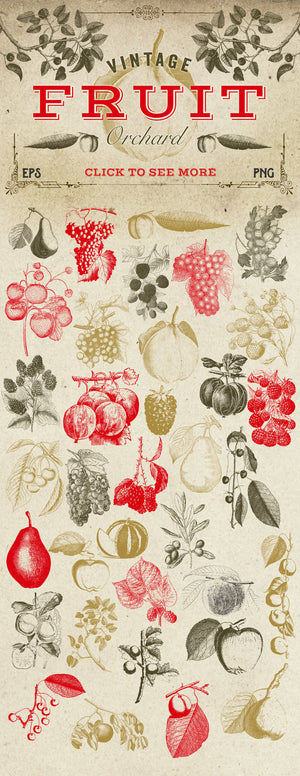 Vintage Fruit Vector Graphics