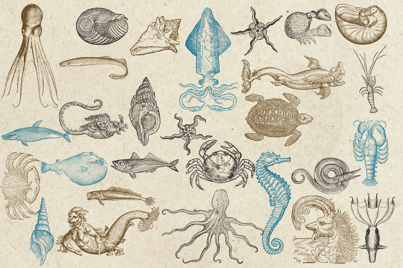Antique Sea Creatures & Monsters Graphics
