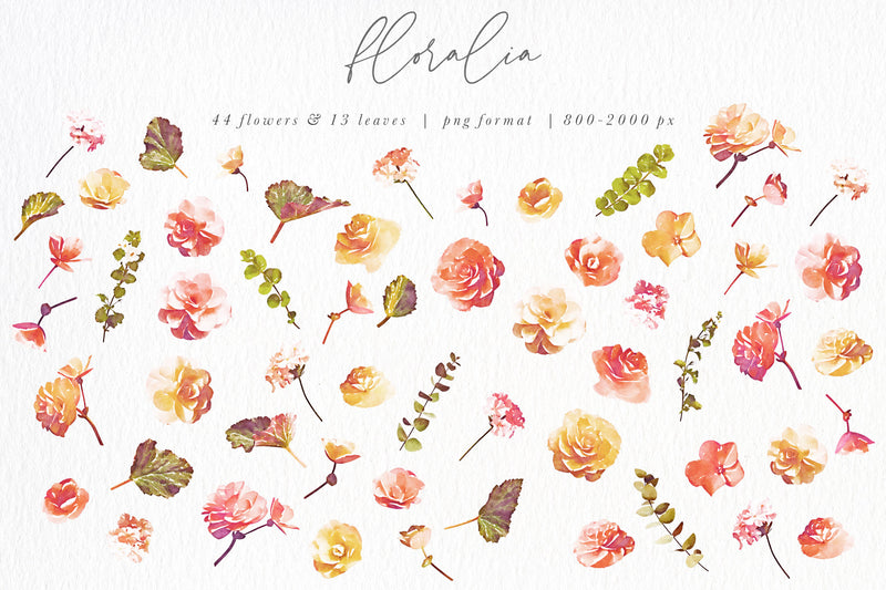 Floralia Watercolor Floral Collection Graphics
