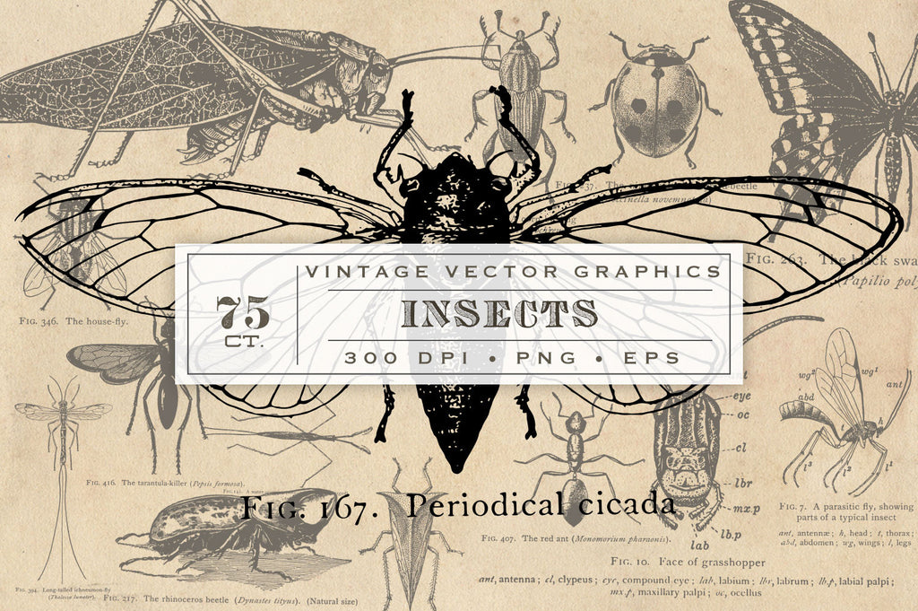 Antique Insect Vector Graphics