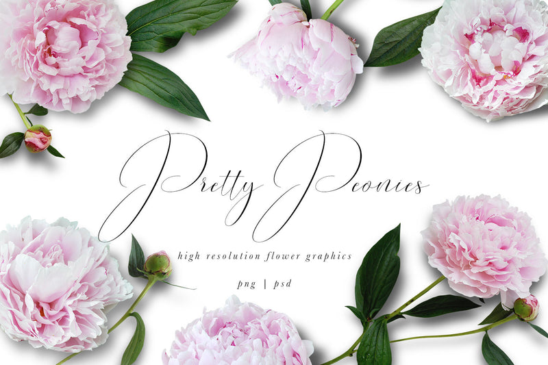 Pretty Peony Flower Graphics