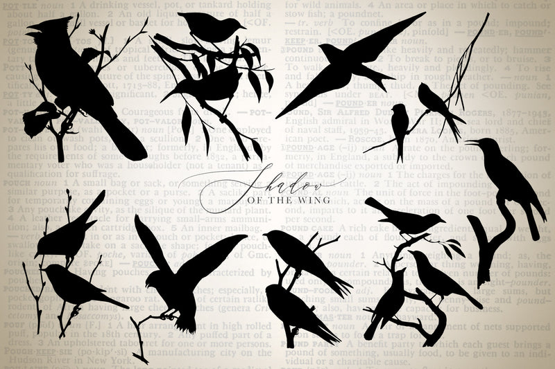 Shadow of the Wing Bird Silhouette Graphics