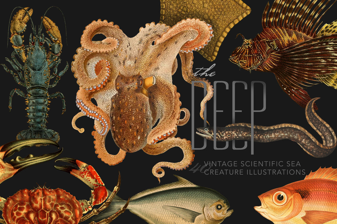 The Deep : 40 Vintage Sea Creature Illustrations