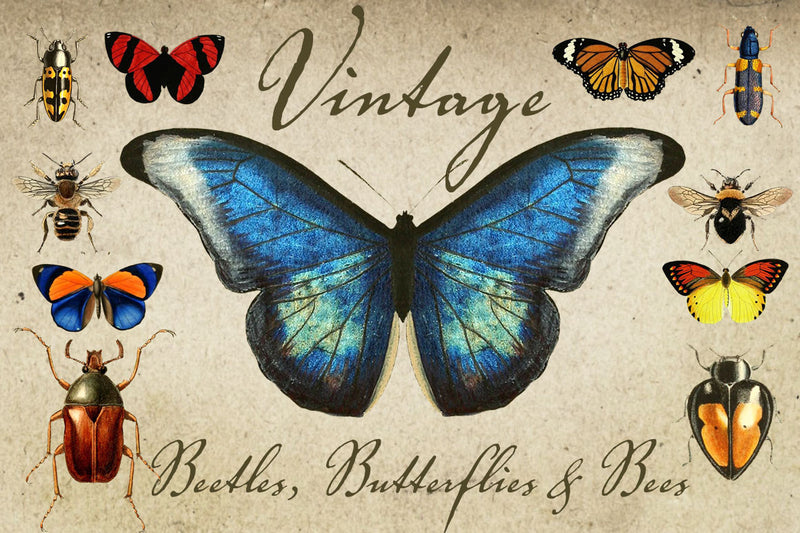 Vintage Beetles, Butterflies & Bees Graphics