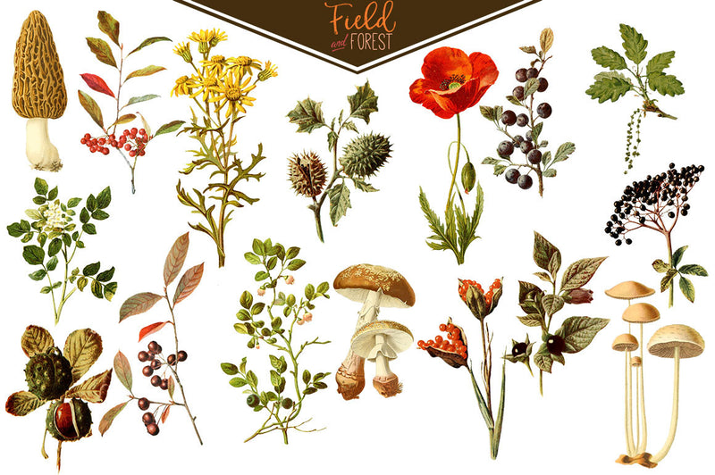 Field & Forest Vintage Botanical Graphics