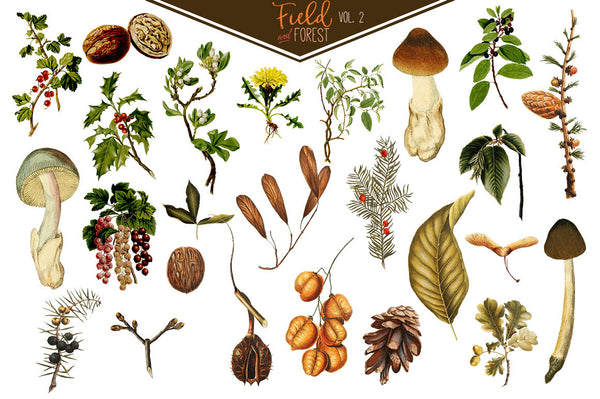 Field & Forest Vintage Botanical Graphics Vol. 2