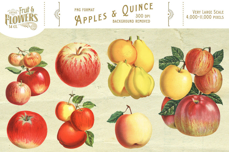 MASSIVE Vintage Fruit and Flower Graphics