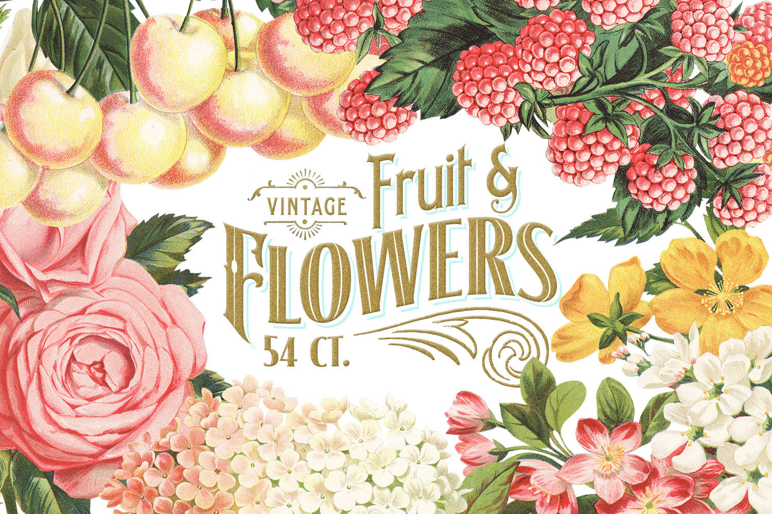 Elegant MASSIVE Vintage Fruit And Flower Graphics