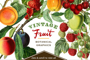 Vintage Fruit Botanical Graphics