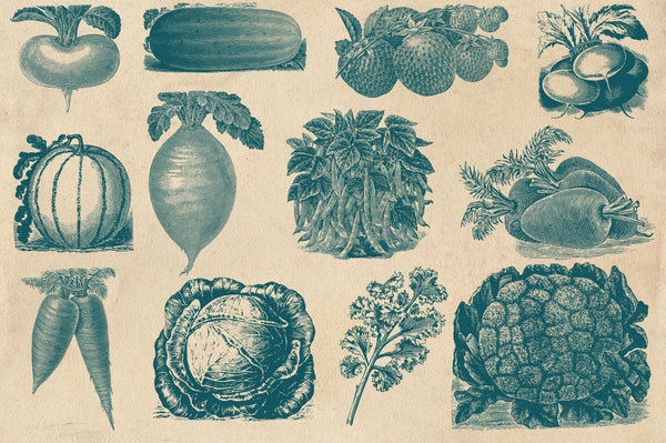 Vintage Fruit and Vegetable Vector Graphics