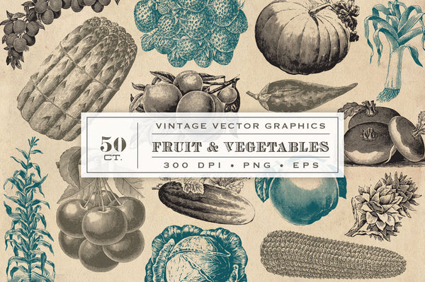 Vintage Fruit And Vegetable Vector Graphics Avalon Rose