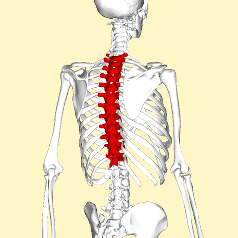 Upper Back Pain & Middle Back Pain