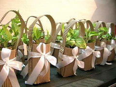gift plants in Chennai for online sale
