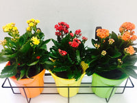Balcony railing planter cum grill mountable flower pot stands