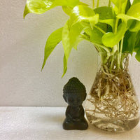 Money plant golden, Neon pothos, Air purifying indoor plant, Money plant in water, Water plant