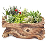 Drift wood pot
