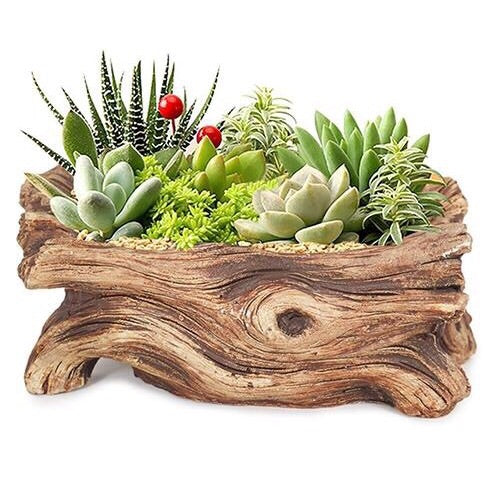 Drift wood pot with plants