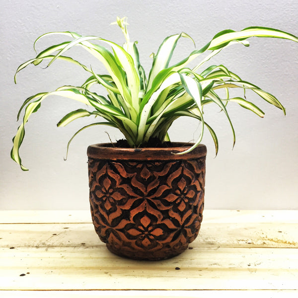 Spider plant in floral metallic finish planter
