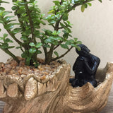 Jade plant in a drift wood planter with relaxing Buddha