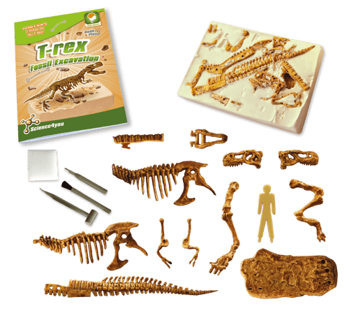 Scavo Fossile: T-Rex, [Science4you_Italia]