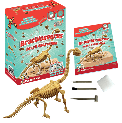 Scavo Fossile: Brachiosaurus, [Science4you_Italia]