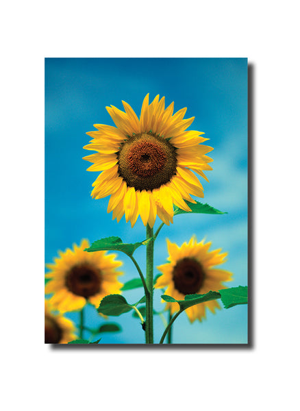 Flowers Notecard set