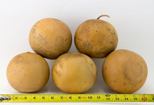 Cannon Ball Gourds, Box of 5, washed and ready - Gourdaments