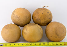 Load image into Gallery viewer, Cannon Ball Gourds, Box of 5, washed and ready - Gourdaments