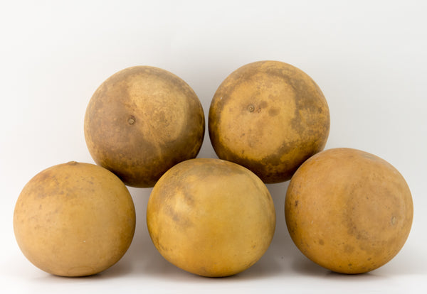 Cannon Ball Gourds, Box of 20 , washed and ready - Gourdaments