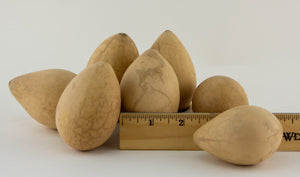 Dried Egg Gourds for Crafting - Gourdaments
