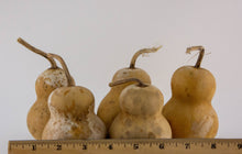 Load image into Gallery viewer, Snowman gourds Mini Bottle dried gourds Perfect for crafting! - Gourdaments