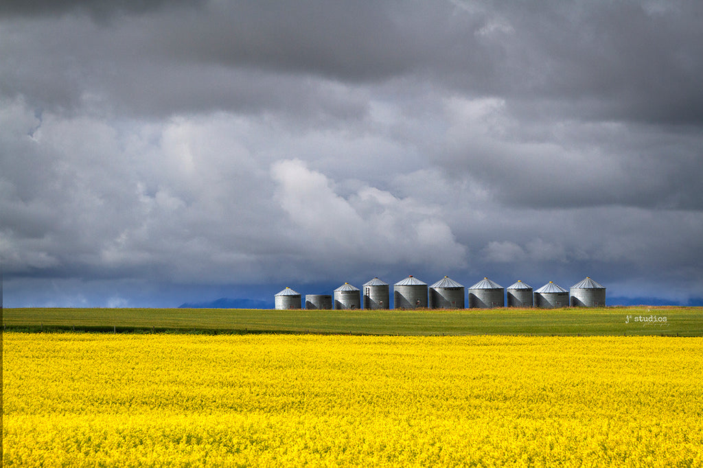 Gorgeous image of grain silos standing tall in golden field of canola. Southern Alberta mountains storm clouds mountains. Quintessential photograph.
