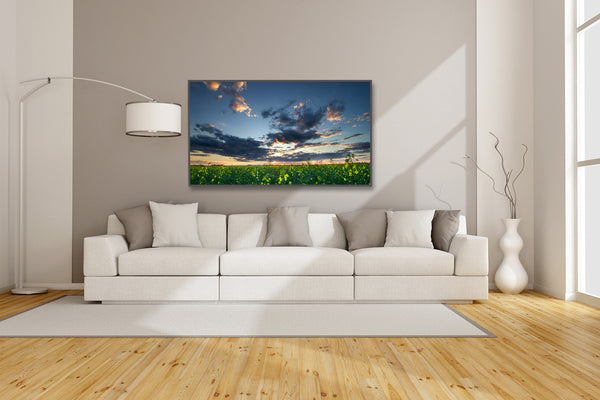 Canvas of a Canola Field at sunset hanging up in a modern living room. Wall decor ideas for executive homes by Larry Jang.
