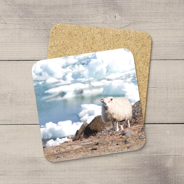 Drink Coaster featuring a sheep grazing by the Icebergs in Iceland.